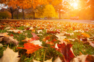 Fall Cleaning Checklist 2021
